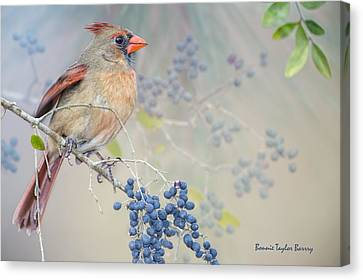 Female Cardinal And Wild Berries Canvas Print by Bonnie Barry