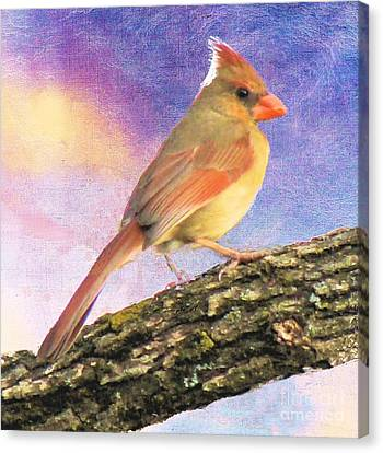 Female Cardinal Away From Sun Canvas Print by Janette Boyd
