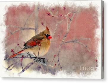Female Cardinal Portrait Canvas Print by Dan Friend