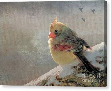 Female Cardinal V Canvas Print by Janette Boyd
