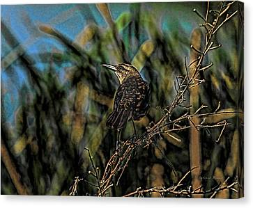 Female Grackle On The Dark Side Canvas Print by Deborah Benoit
