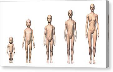 Full-length Portrait Canvas Print - Female Human Body Scheme Of Different by Leonello Calvetti