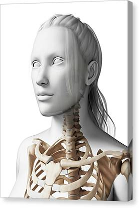Female Neck Bones Canvas Print