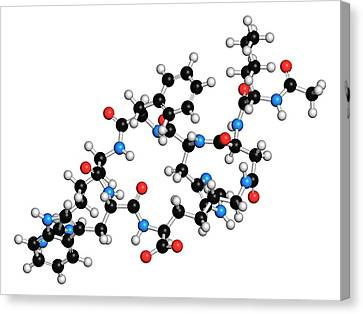 Female Sexual Dysfunction Drug Molecule Canvas Print by Molekuul