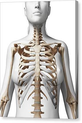 Female Skeleton Canvas Print by Sebastian Kaulitzki