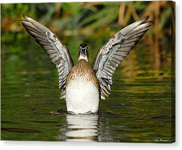 Female Wood Duck Canvas Print by Avian Resources