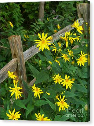 Fence And Flowers Canvas Print by Brian Mollenkopf