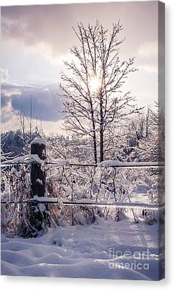 Fence And Tree Frozen In Ice Canvas Print by Elena Elisseeva