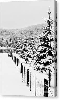 Fence Line Canvas Print by Tim Wilson