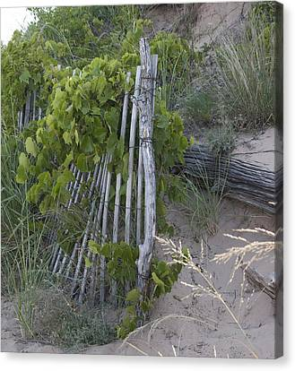 Fence N Sand Canvas Print