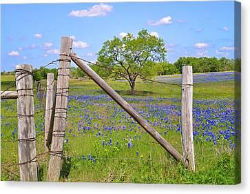 Fenced-in Beauty Canvas Print by Lynn Bauer