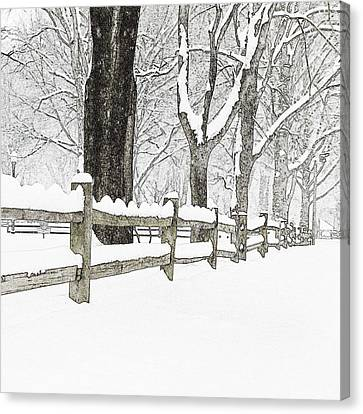 Fenced In Forest Canvas Print by John Stephens