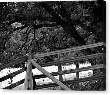 Fenceline Canvas Print by Bridget Johnson