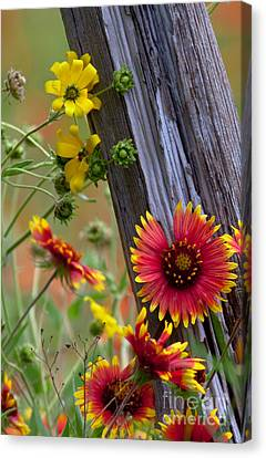 Fenceline Wildflowers Canvas Print