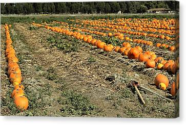 Fencing The Pumpkin Patch Canvas Print by Michael Gordon
