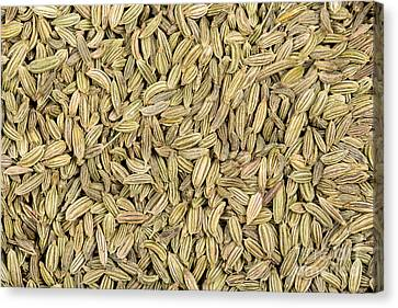 Fennel Seeds Canvas Print by Jane Rix