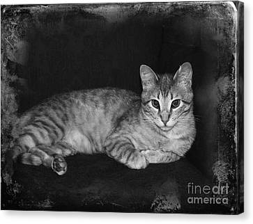 Feral Cat Day Canvas Print