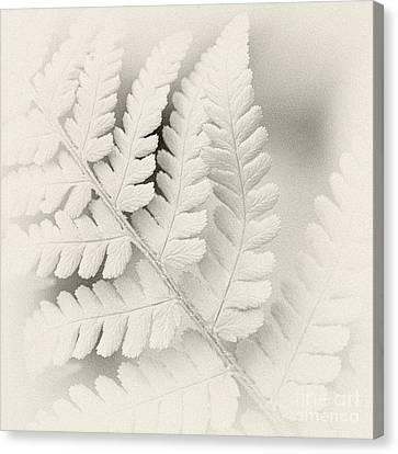 Fern 1 Canvas Print by Janet Burdon
