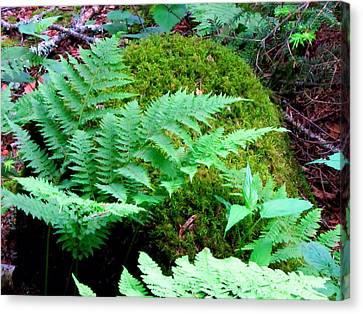 Fern And Moss Canvas Print