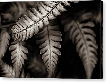 Fern Canvas Print by Arkady Kunysz