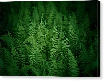 Fern Bed Canvas Print