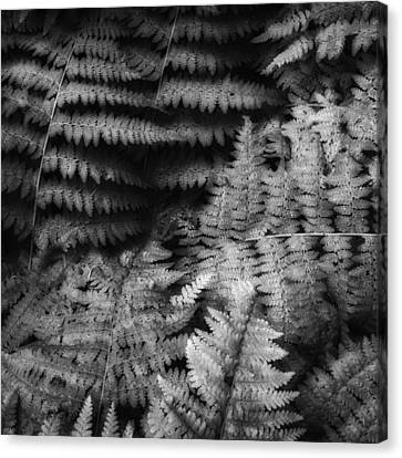Fern Black And White Canvas Print by Bill Wakeley