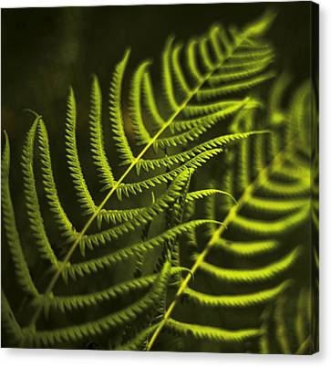 Canvas Print featuring the photograph Fern by Bradley R Youngberg