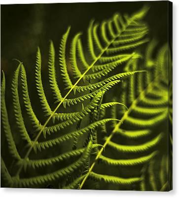 Fern Canvas Print by Bradley R Youngberg