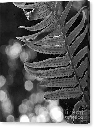 Fern Detail Canvas Print