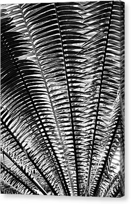 Fern Frond Canvas Print by Steven Ainsworth