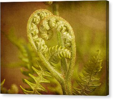 Canvas Print featuring the photograph Fern Heart by Peggy Collins