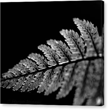 Fern In Cameo Canvas Print