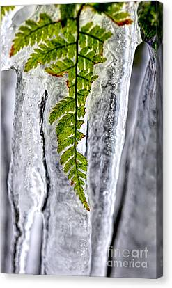 Fern In Ice Canvas Print by Dan Friend