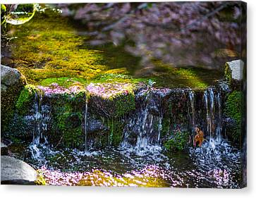 Canvas Print featuring the photograph Fern Spring by Mike Lee