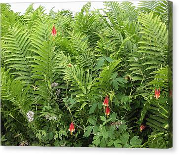 Canvas Print featuring the photograph Ferns And Columbines by Wayne Meyer