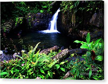 Ferns Flowers And Waterfall Canvas Print by Thomas R Fletcher