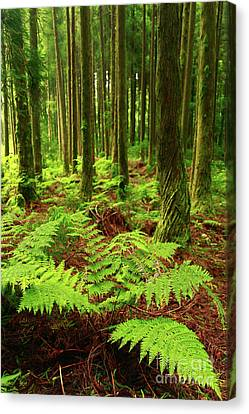 Intense Color Canvas Print - Ferns In The Forest by Gaspar Avila