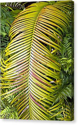 Canvas Print featuring the photograph Ferns by Kate Brown