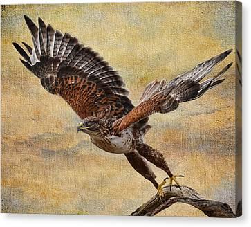 Ferruginous Hawk Canvas Print by Russell Dudzienski