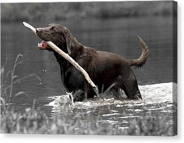 Fetch- Labrador Retriever Digital Art Canvas Print by Gerald Marella