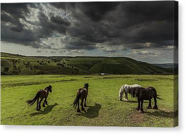 Fetlocked Friends Canvas Print