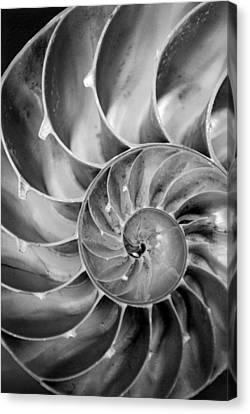 Fibonacci Canvas Print by Kjirsten Collier