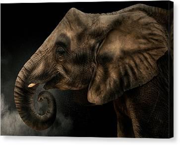 Elephants Canvas Print - Fibonacci by Pedro Jarque