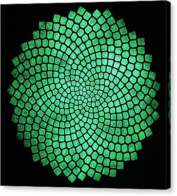 Fibonacci Sunflower Canvas Print by Twilight Vision