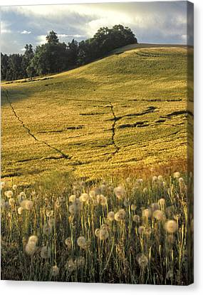 Contour Farming Canvas Print - Field And Weeds by Latah Trail Foundation