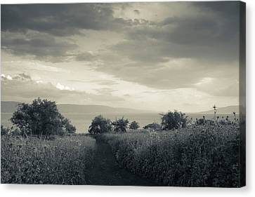 Field By The Sea Of Galilee, Tiberias Canvas Print