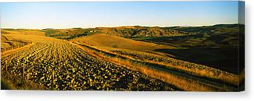 Field, Crete Senesi, Tuscany, Italy Canvas Print by Panoramic Images