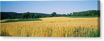 Field Crop, Maryland, Usa Canvas Print by Panoramic Images
