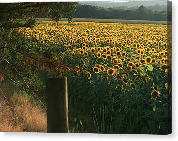 Field Dreams No.2 Canvas Print by Neal Eslinger