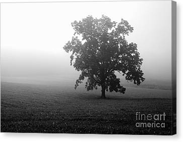 Field In Cades Cove Canvas Print by Deborah Scannell